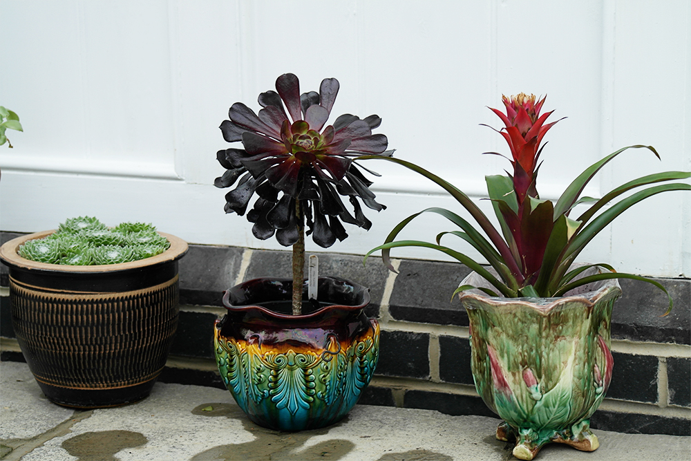More succulents, that plant pot on the right seems really familiar - maybe one my mum has had for many years?