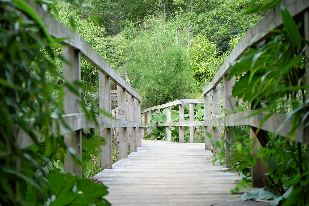 Boardwalk, Exbury Gardens