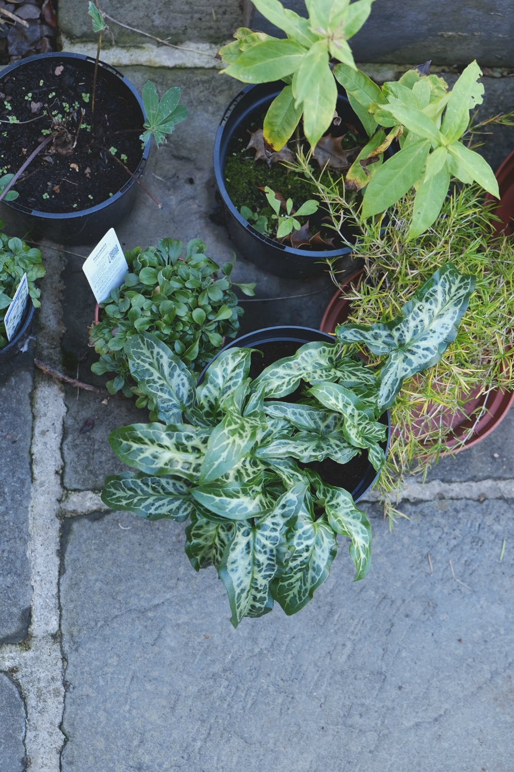 Aerial shot of potted plants