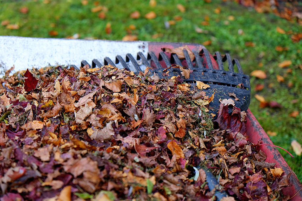 Above: Grandads wheelbarrow of  fallen leaves