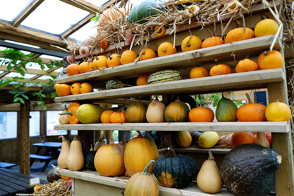 Above: Gourdgeous!