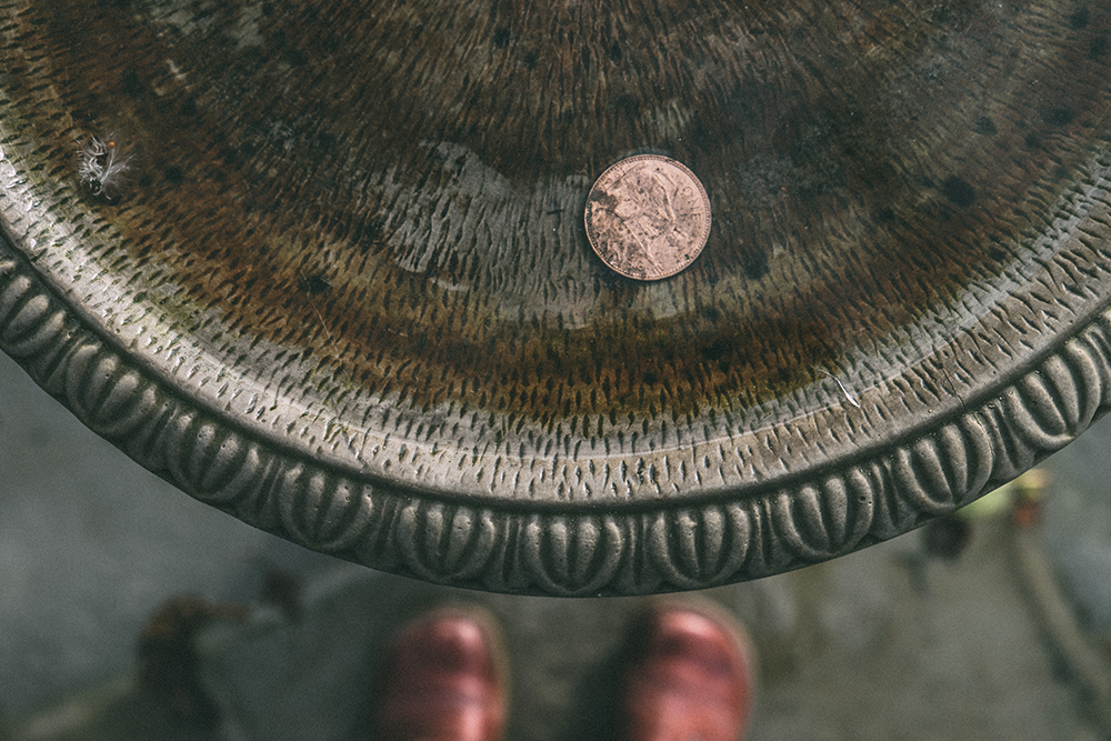 Copper penny in bird bath
