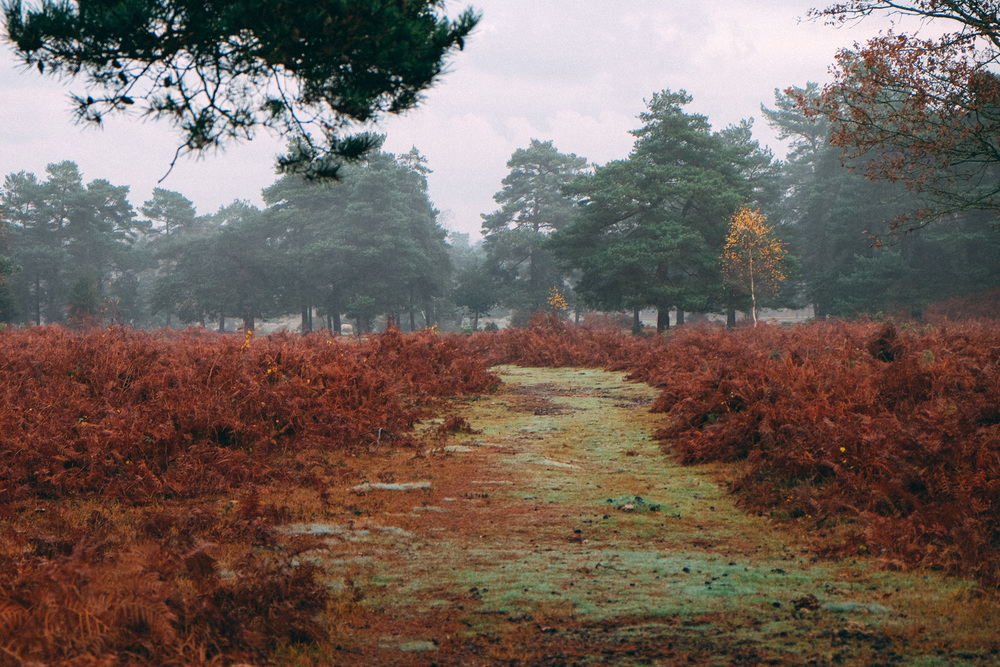 Wellow, New Forest