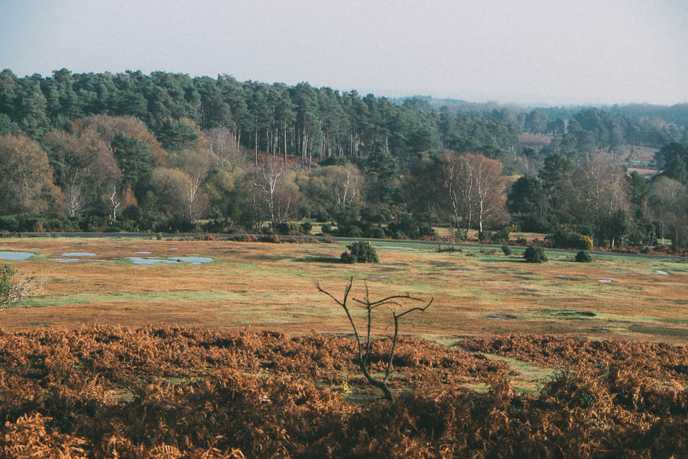 The view from Stagbury Mount