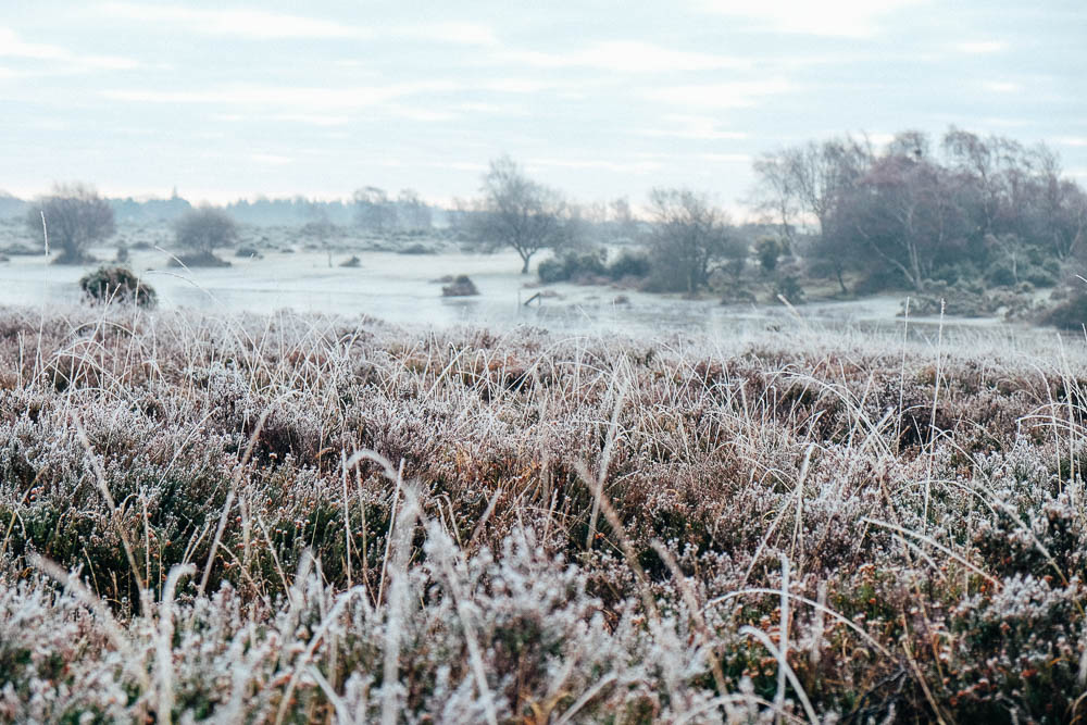 Kneeling amongst the heather and grasses on frosty morning