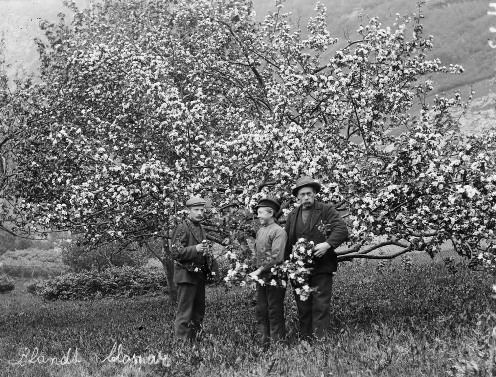 A proper stroll in an orchard