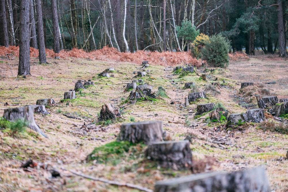 getting ready for a New Forest in the new forest