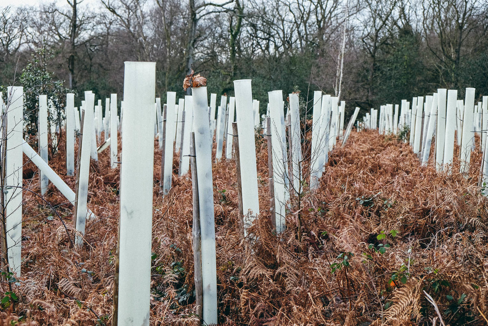 New trees planted in New Forest