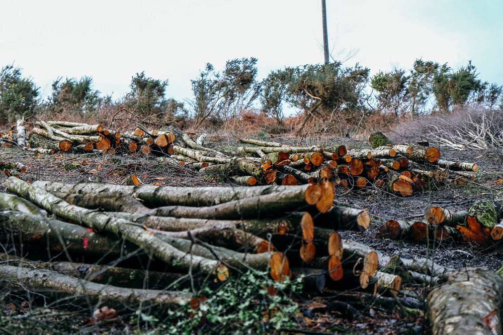 Felled logs in the New Forest