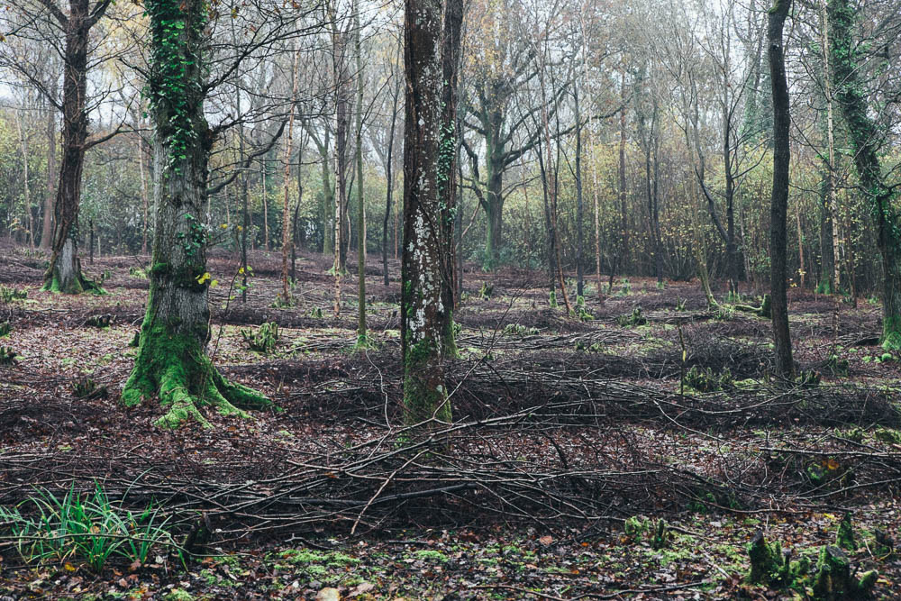 coppiced woods