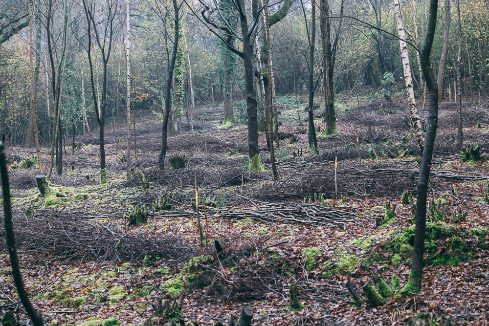 coppiced wood