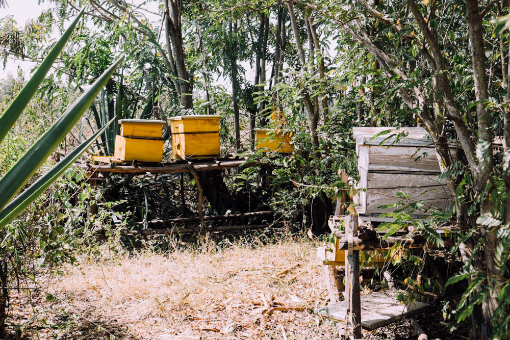 bee hives in Kenya