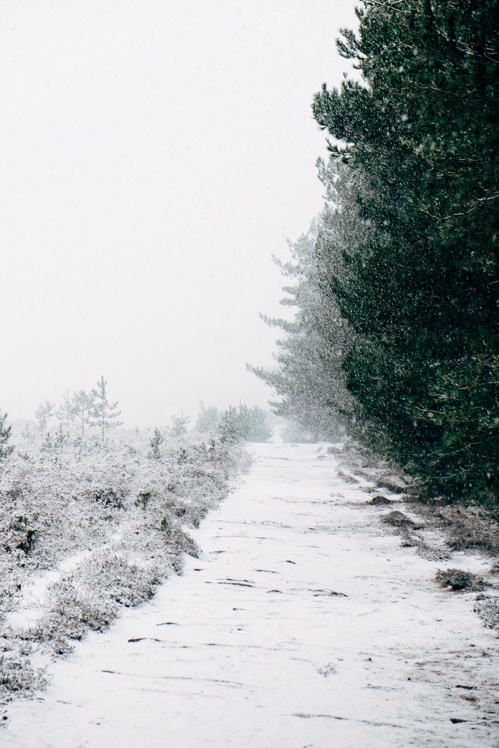 Photographs of snow in The New Forest