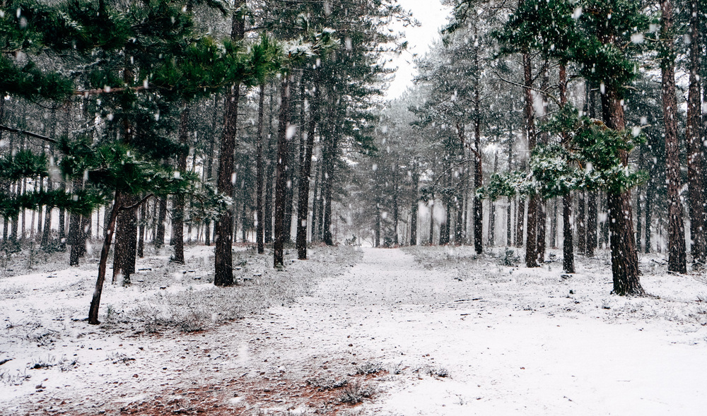 Photographs of a forest in snow