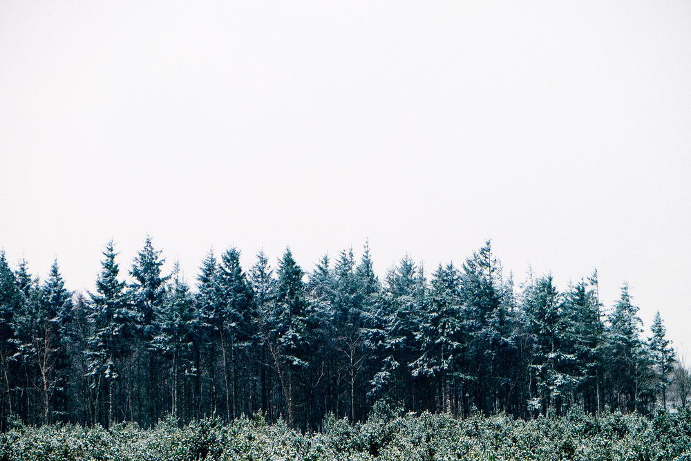 A very snowy forest