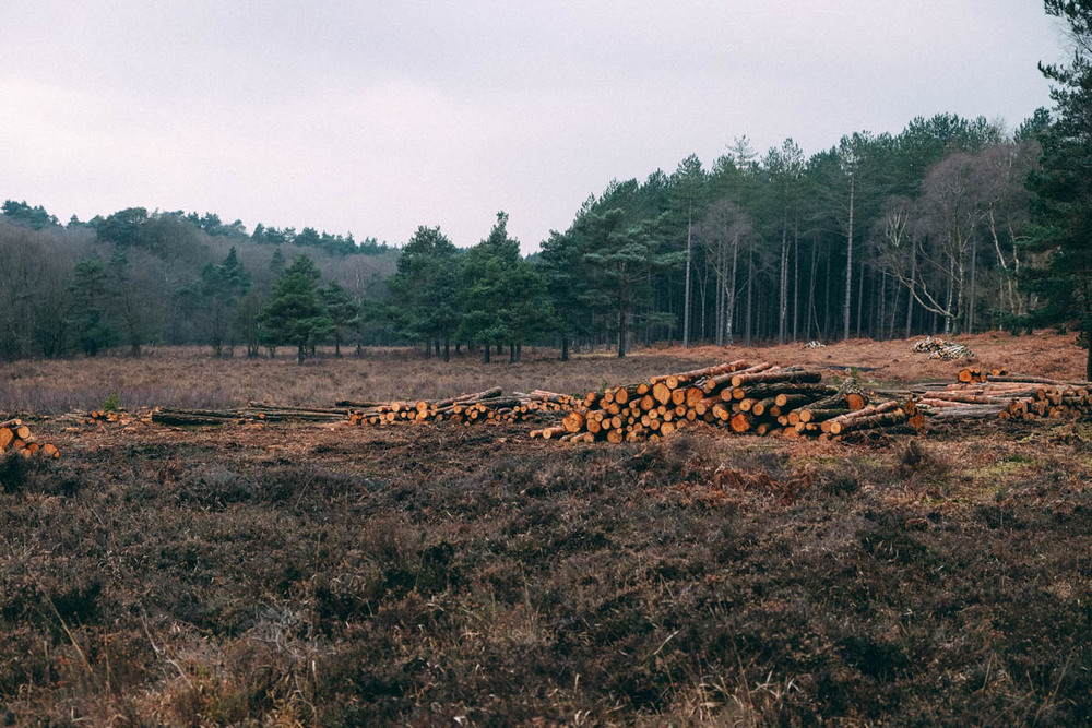 low timber stacks, Nr Matley Wood, New Forest