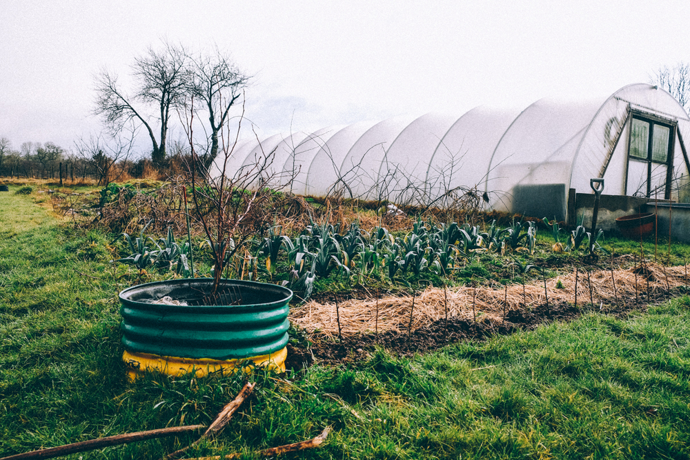 The poly-tunnel at eco gite Lenault