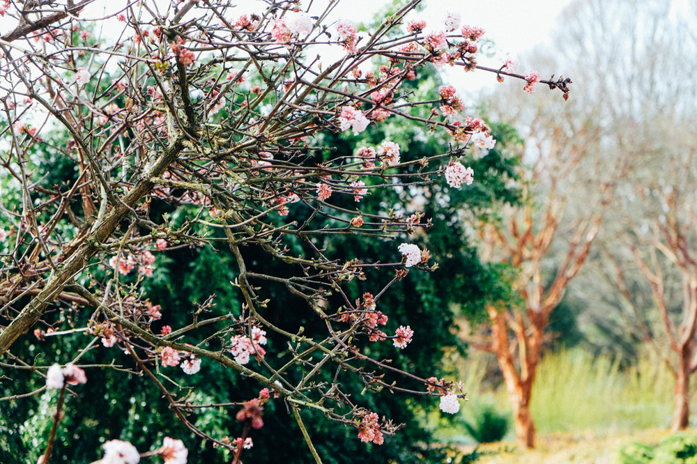 Blossom in the Winter Garden at Sir Harold Hillier Gardens