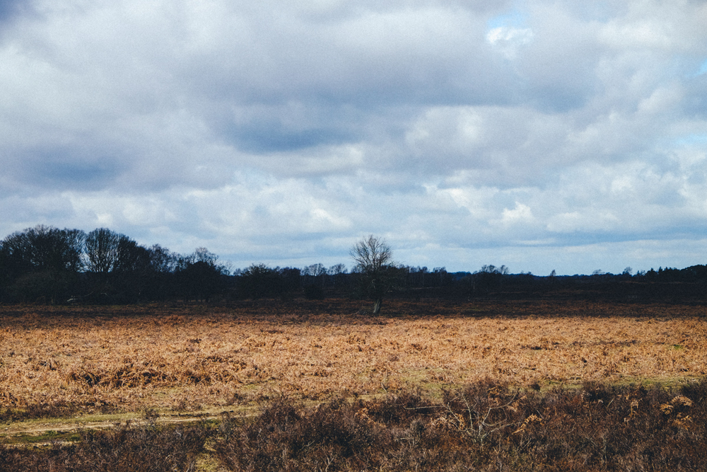 THE NEW FOREST