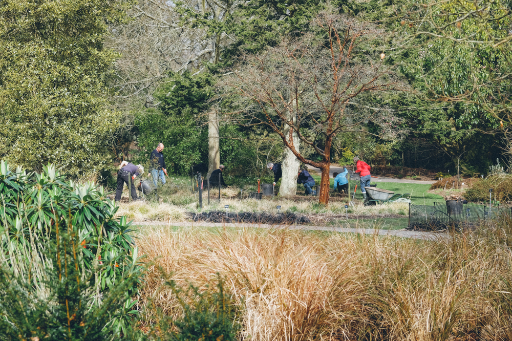Volunteers   AT   SIR HAROLD HILLIER GARDENS IN MARCH