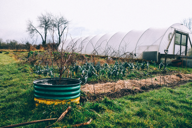 Polytunnel at Eco Gites Lenault