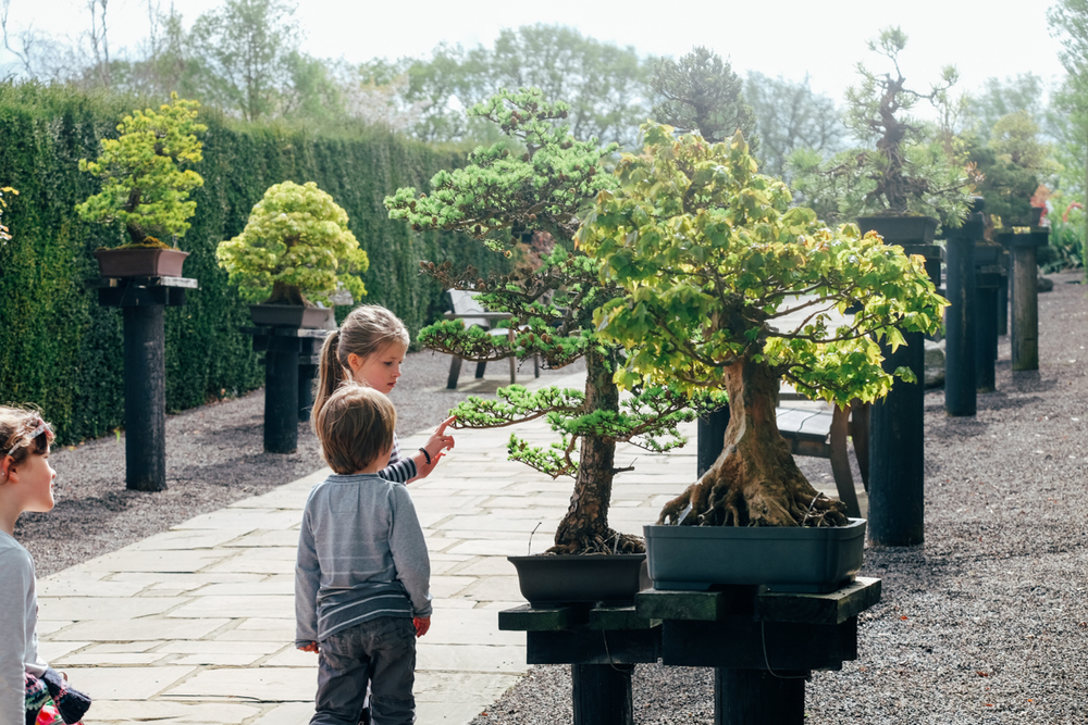 Fascinated with the bonsai trees.