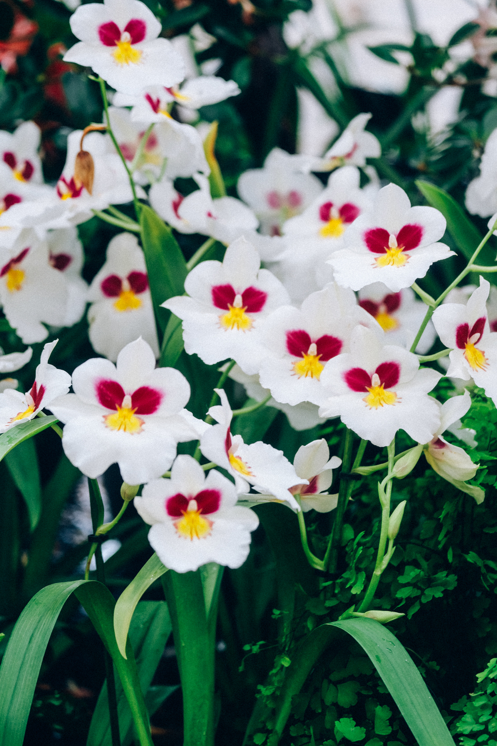The Scent of Wisley, Orchids