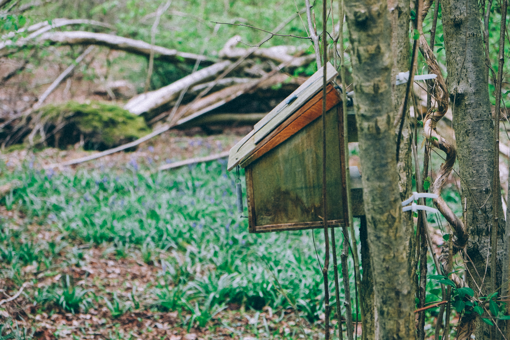 one of the many bird boxes in the woods, I couldn't resist peeking inside