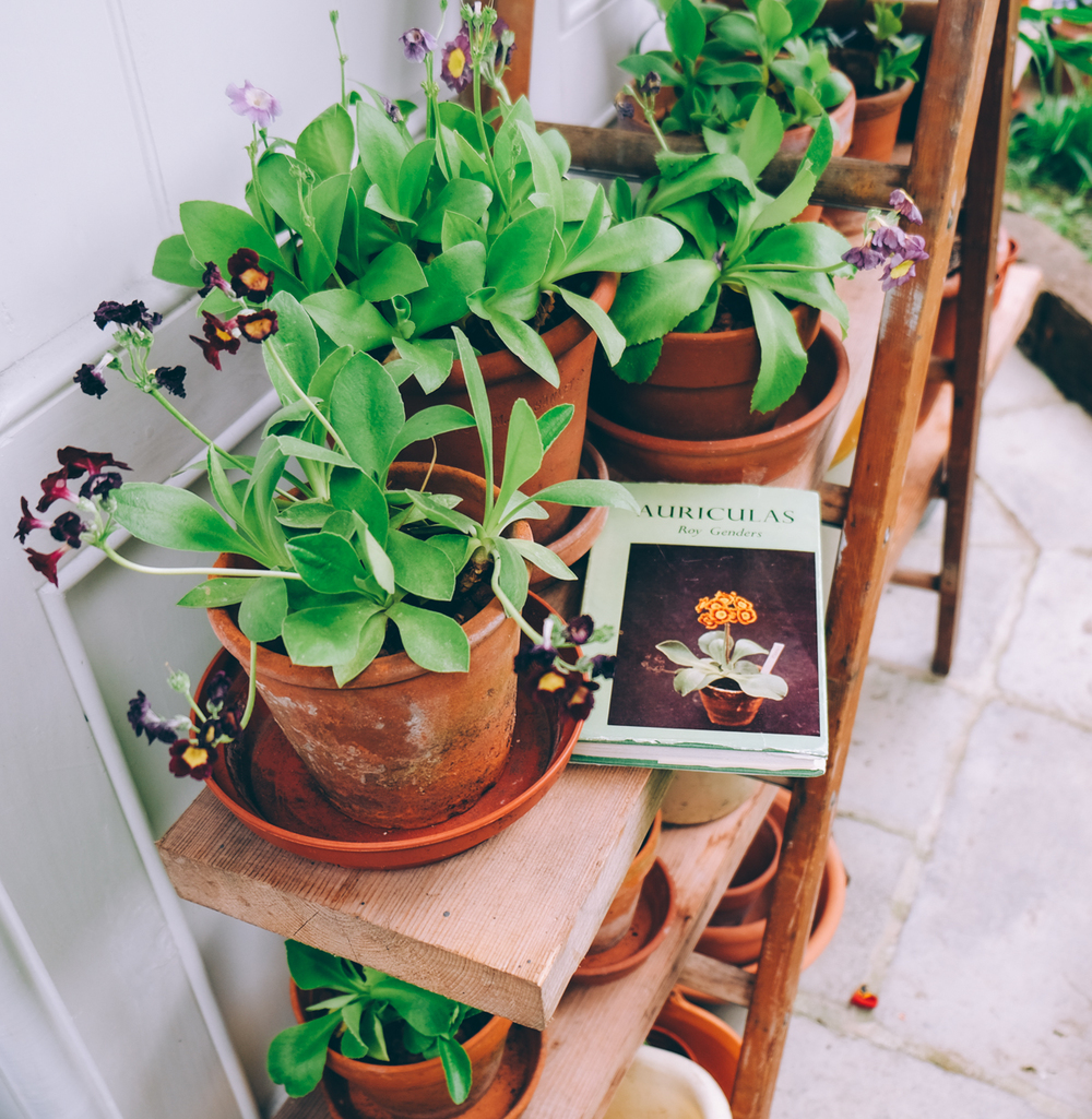 AURICULA THEATRE BEGINNINGS
