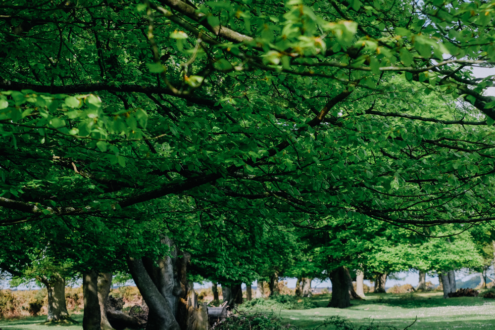 Leafy shade, a  walk by Ipley Manor, New Forest