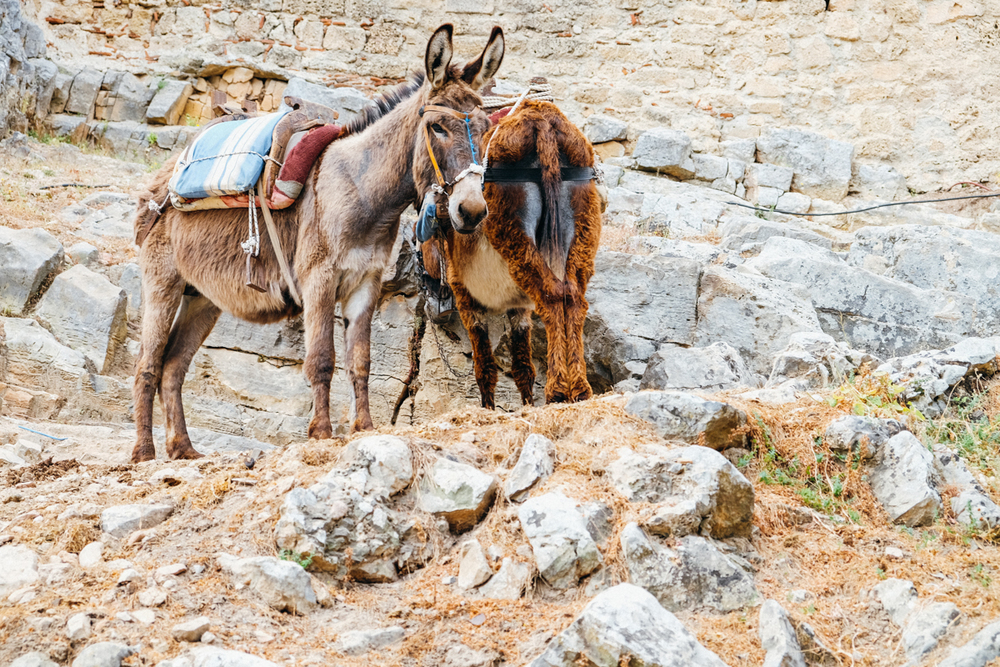 donkeys at Lindos