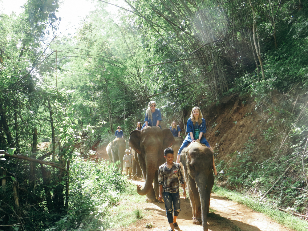 Elephant Trekking with Blue Elephant Tours