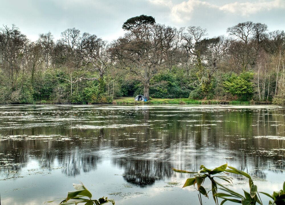 Pylewell Park, New Forest