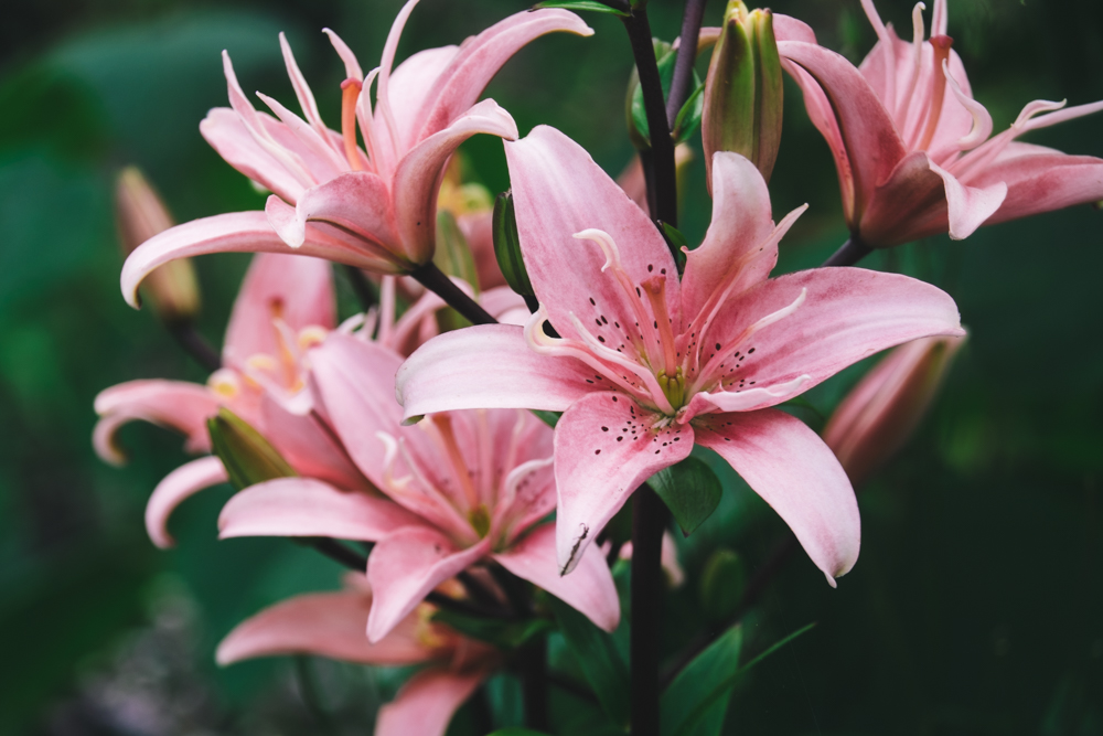 Photos of Exbury Gardens: Lilies