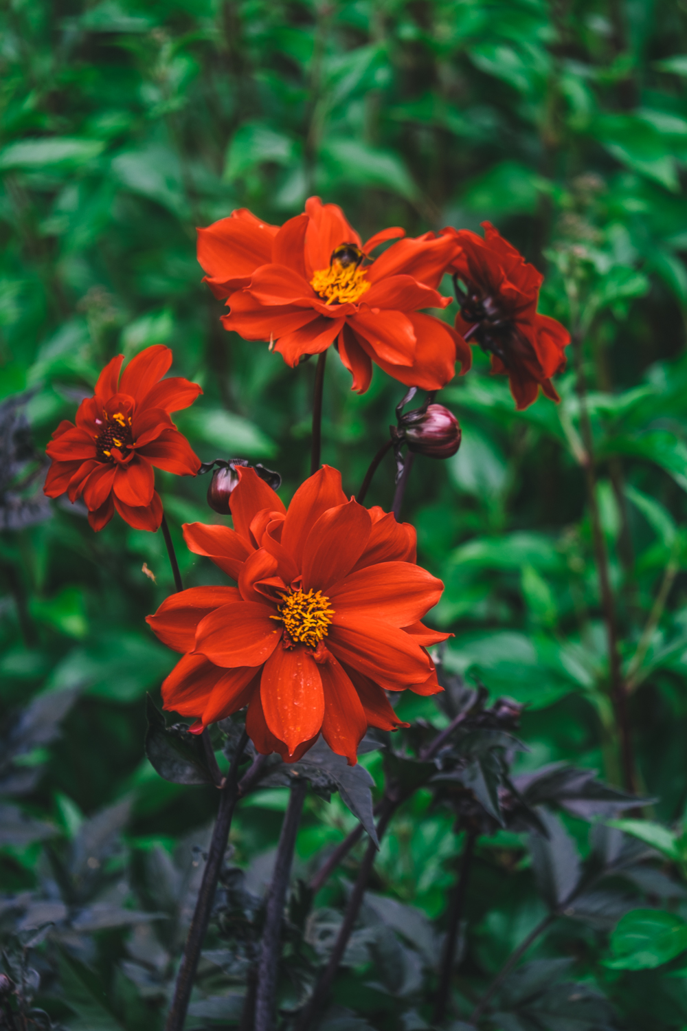 Photos of Exbury Gardens: Cosmos