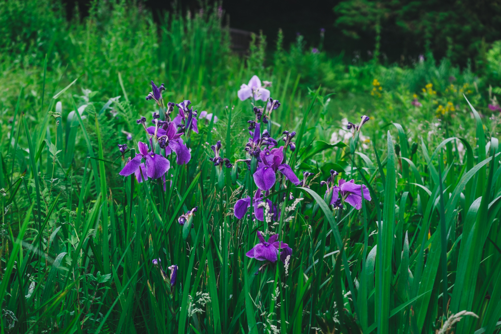Photos of Exbury Gardens: Iris