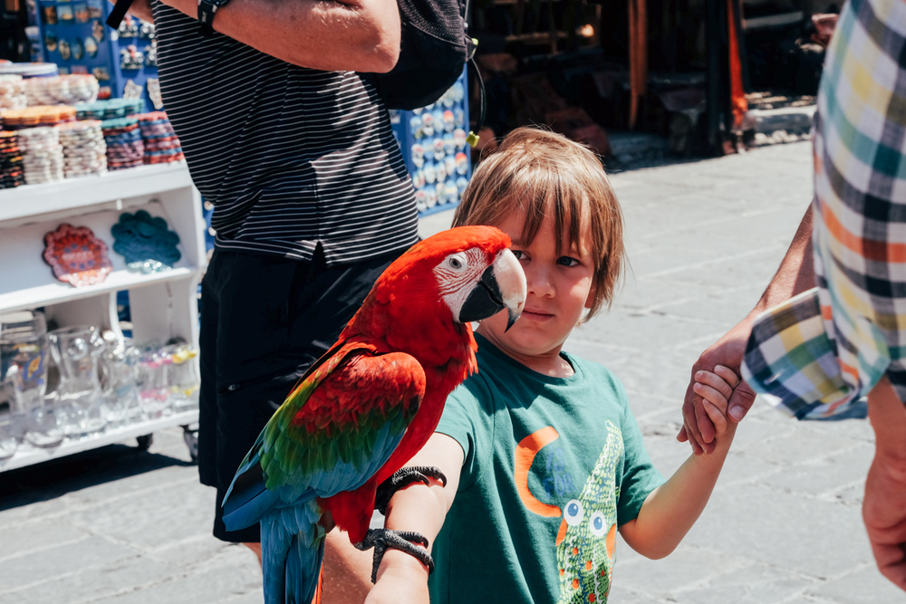 Restaurant owners in some of the main streets try to charm you in to dine by popping a parrot on your children. Here's Oscar looking suitably impressed.