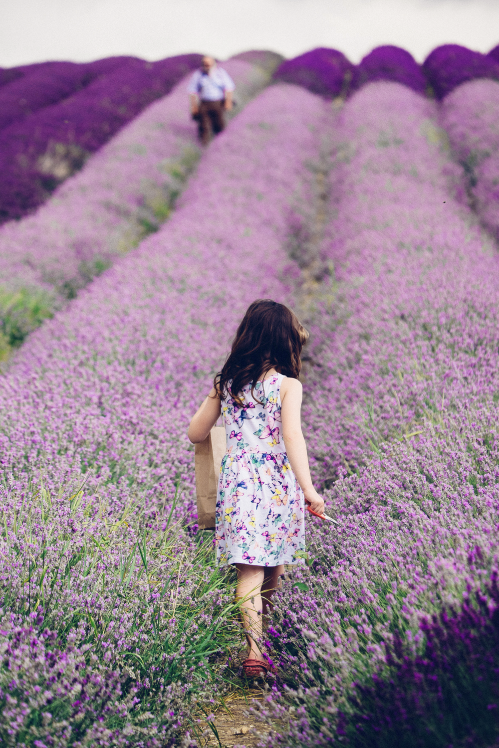 Girl walking in lavender, Hitchin Lavender