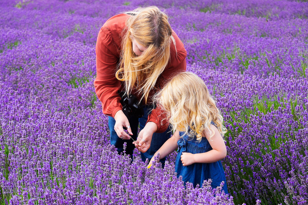 HAYLEY FROM SHUTTERFLIES & DAUGHTERHITCHIN LAVENDER