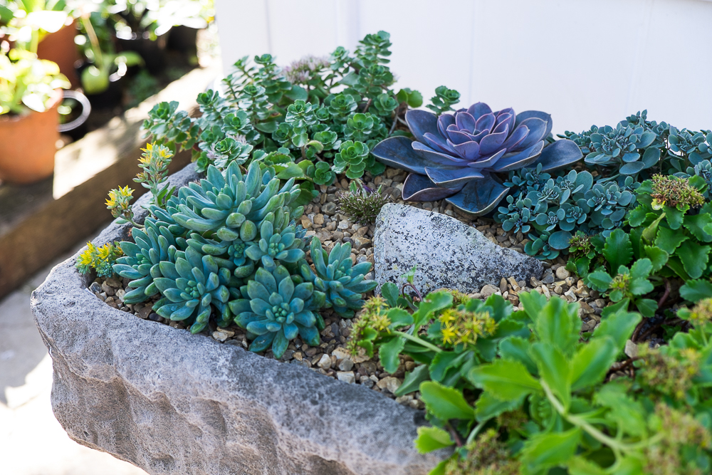 Homemade alpine / succulent planter