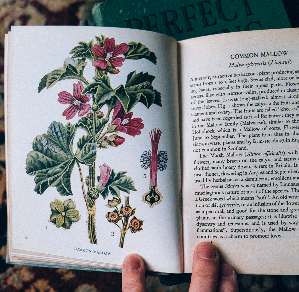 A guide to British Wild Flowers