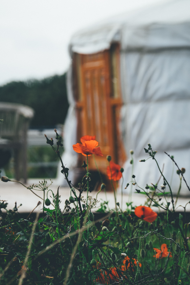 Poppies at Somerset Yurts