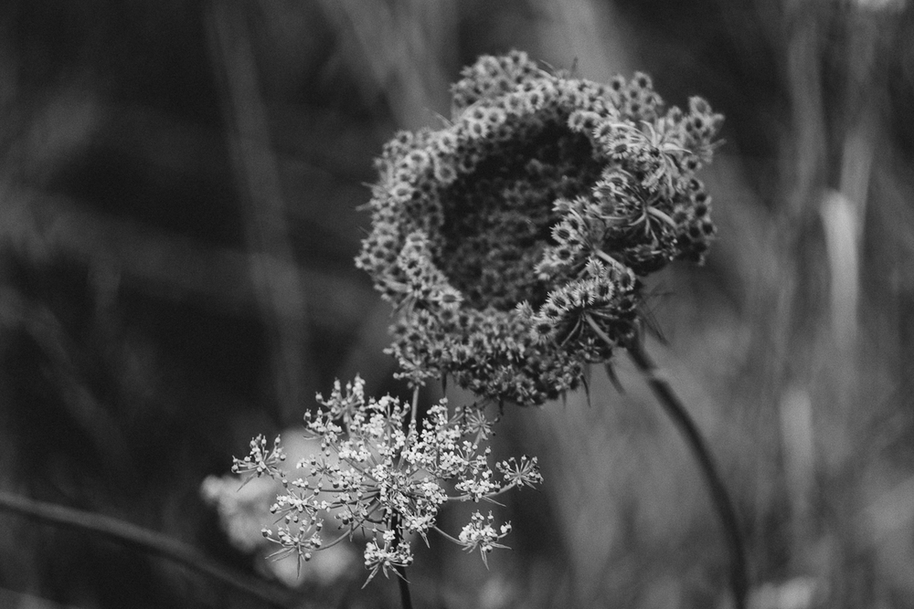 Nature in black & white