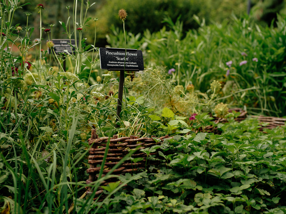 A taste of the English Countryside at Brooklyn Botanic Gardens