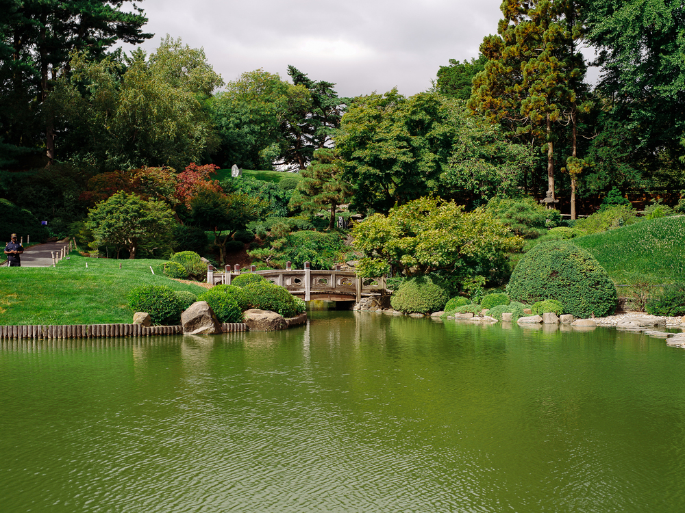 Japenese Hill and Pond Garden at Brooklyn Botanic Gardens