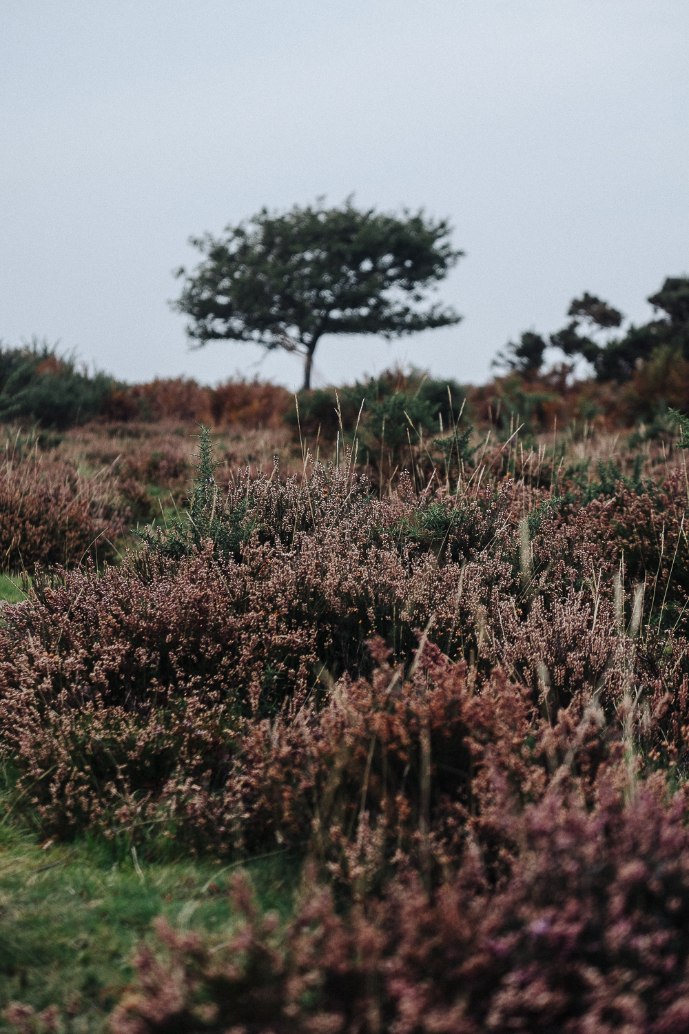 Changing seasons in the New Forest