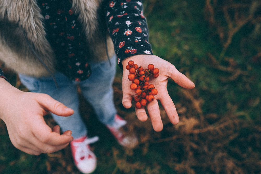 Red berries in child's hand via Fable & Folk