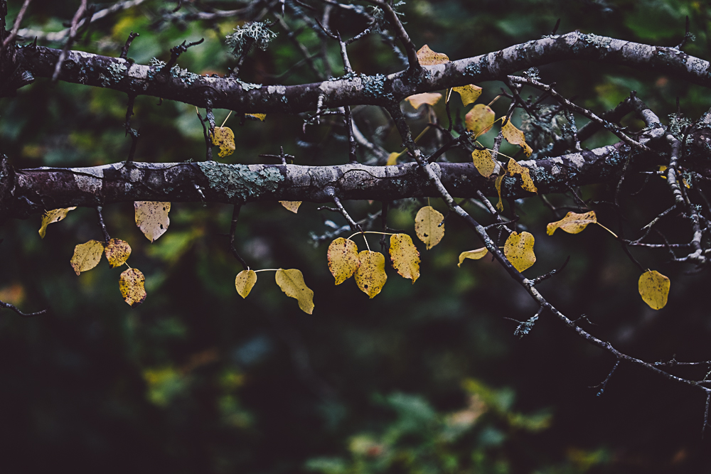 Autumn leaf photos via Fable & Folk