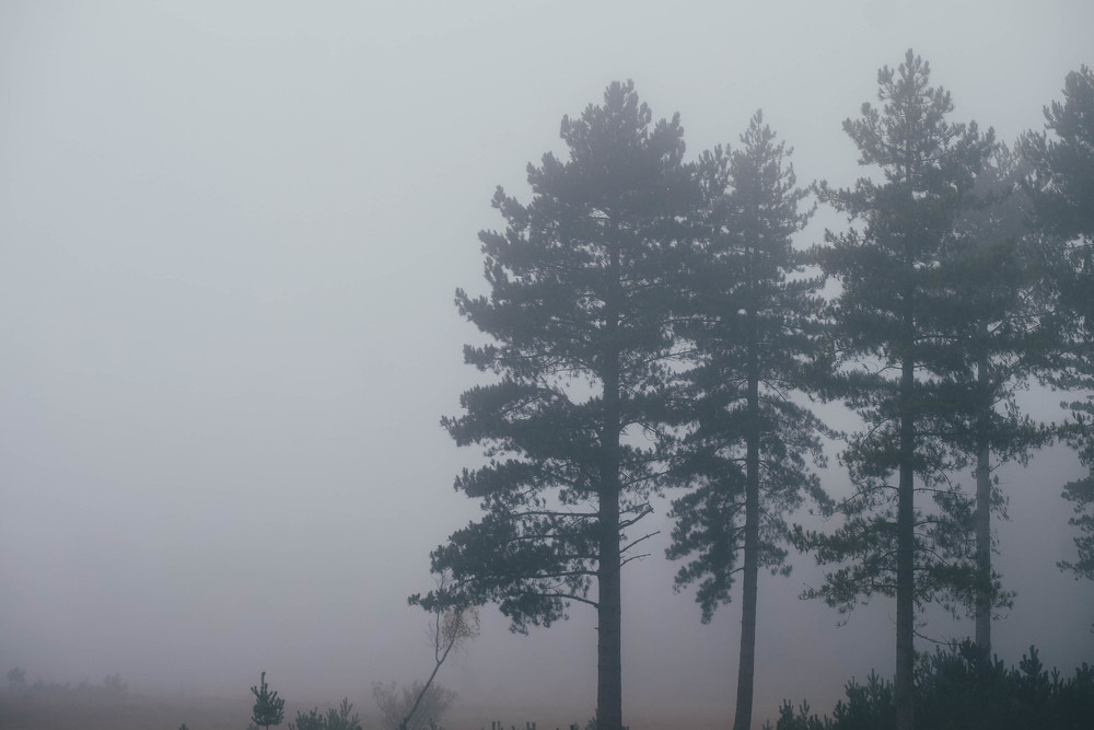 Foggy New Forest