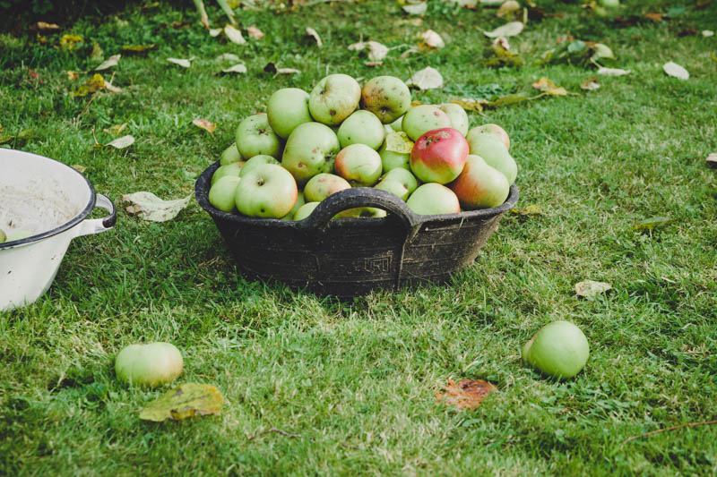 Windfall apples spell Autumn